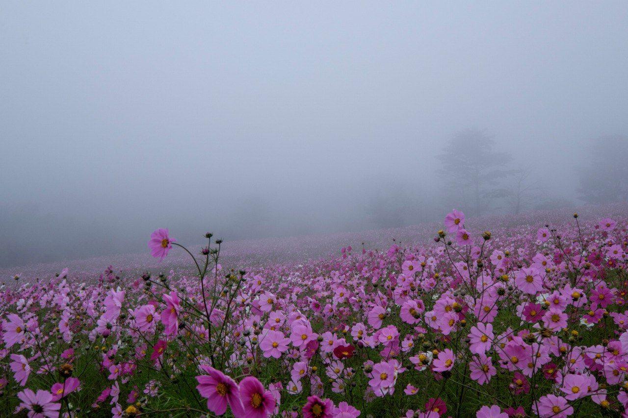 фото цветы в тумане флешки