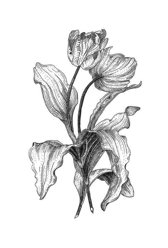 Tulips Alu Dibond Druck Jetzt Bestellen Unter: Https://moebel .ladendirekt.de/dekoration/bilder Und Rahmen/poster/?uidu003dc16bf7e2 Aef5 56fd Abe4   ...