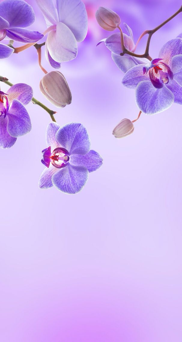 Nature Wallpaper Iphone In 2019 Orchid Wallpaper Flower