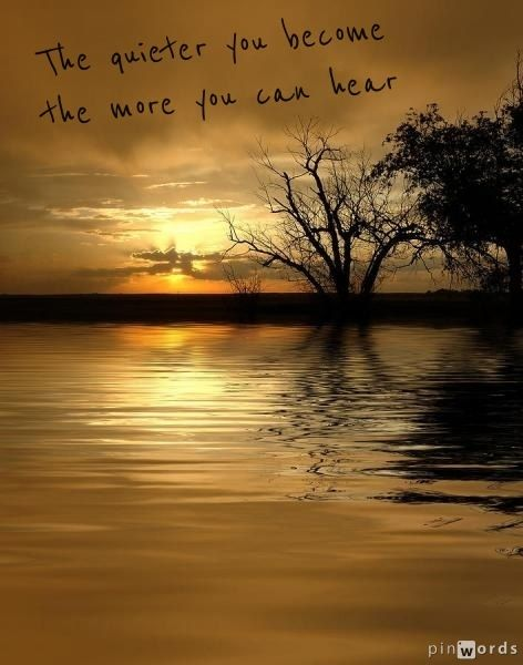 Words Of Wisdom Quote Citat Photo Sunset Trees Water