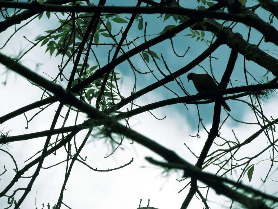 Bird Medellin