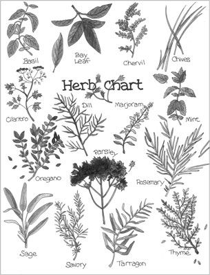 Getting to Know Herbs | For Dummies | Pinterest | Herbs