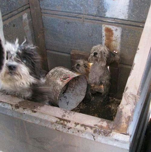 Backyard breeders,puppy mills, dog auctions. Many of their