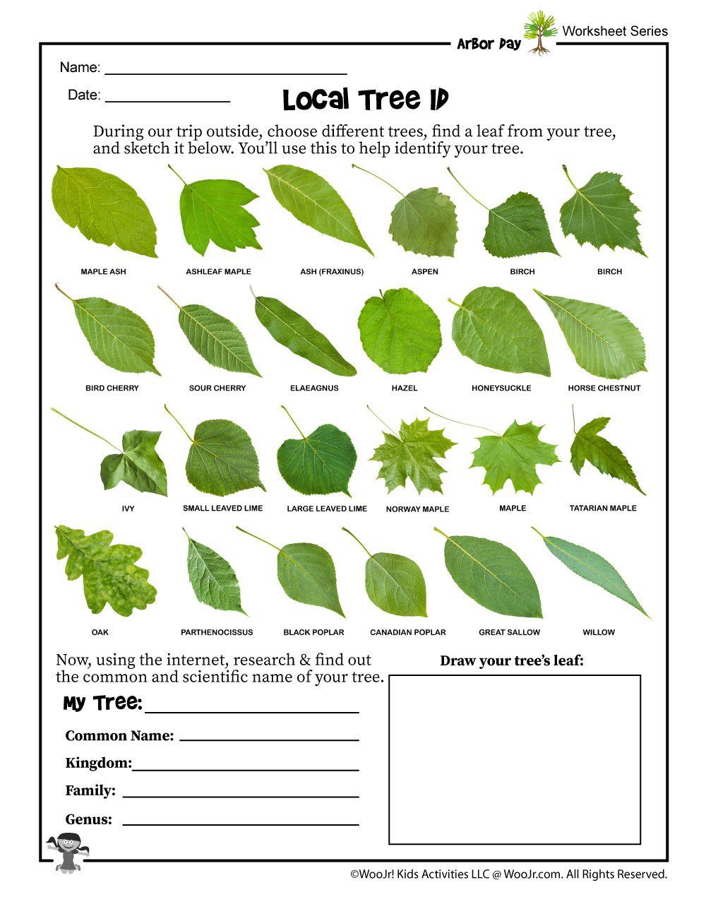 Tree Identification Worksheet Woo Jr Kids Activities In 2020 Tree Identification Arbour Day Trees For Kids
