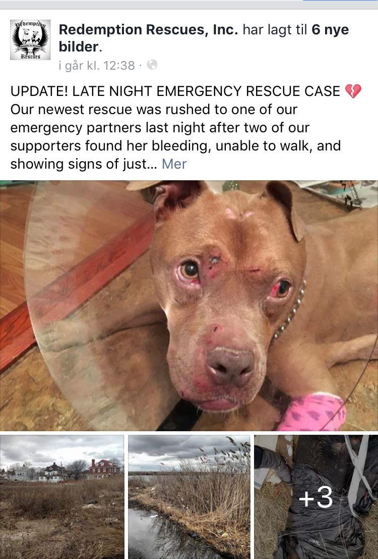 Pin Auf Animal Help Adopt