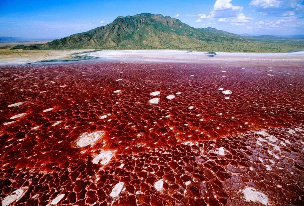 Lago Natron Ubicado En El Gran Valle De Rift Tanzania Frontera Con Kenia El Lago Natrón Es Un Cuerpo De Agua Muy Peculiar Su Lago Lagos Sitios Para Visitar