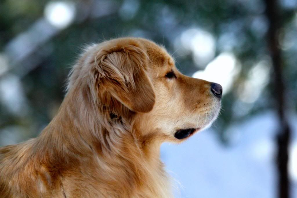 Tally At Age 4 Jill Simmons Poeticgold Farm I Love Dogs Dogs