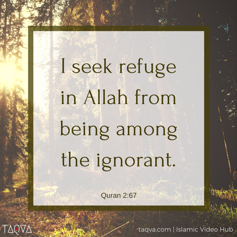 """""""I seek refuge in #Allah from being among the ignorant."""" Al-Qur'an 2:67"""