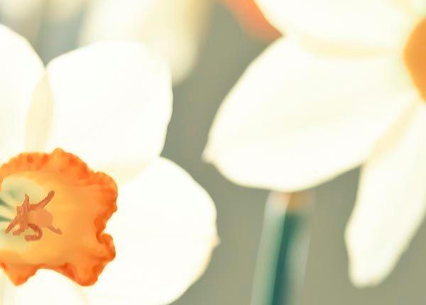 Yellow Daffodil photography - fresh spring garden - orange green