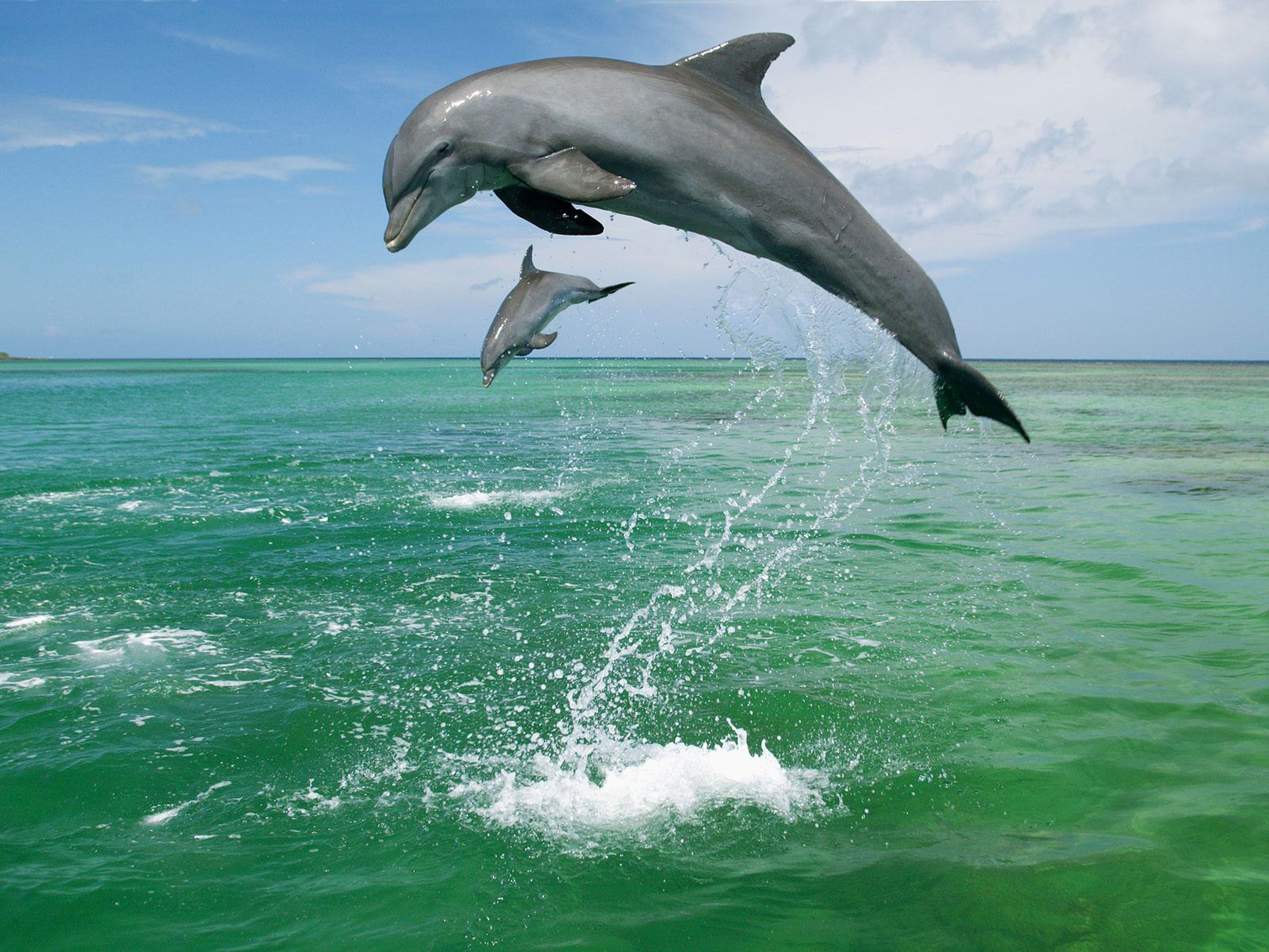 baby sea animals bottlenose dolphins in caribbean sea ocean