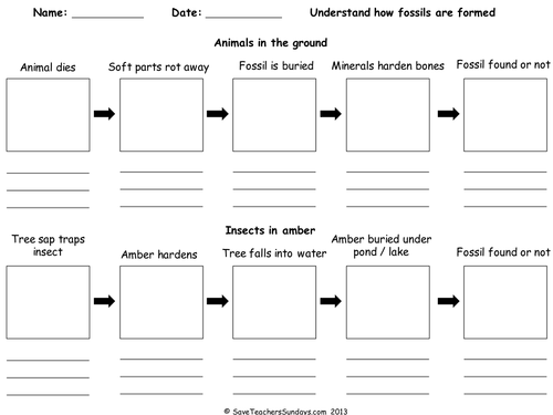 How fossils are formed (worksheet).ppt | Fossils, Worksheets ...