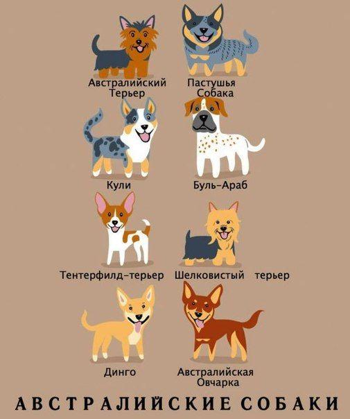 и 949 фотографий породы собак собаки животные