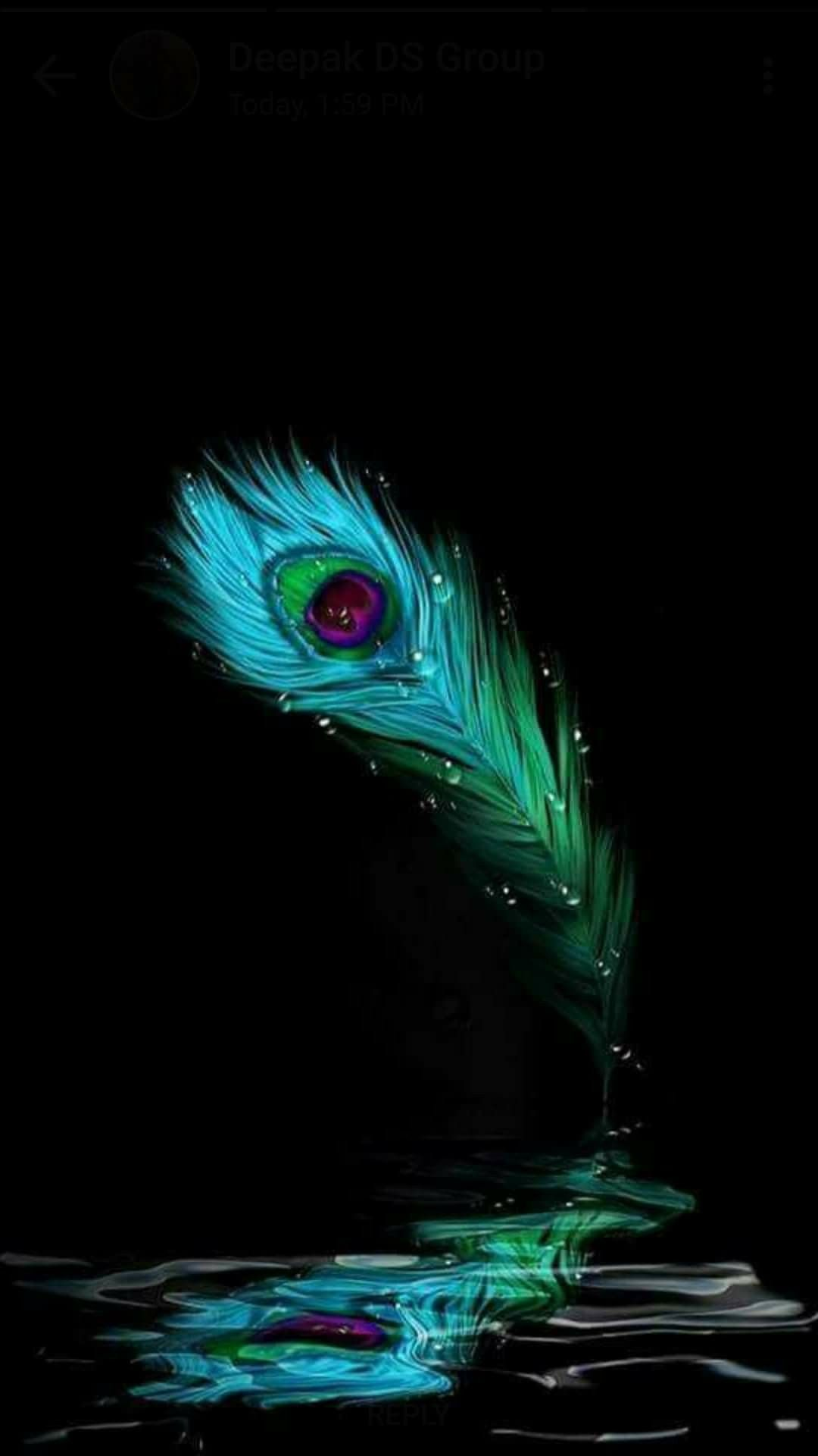 Peacock Feather Beauty Peacock Feather Divine Krishna Wallpaper Lord Krishna Wallpapers Krishna Flute