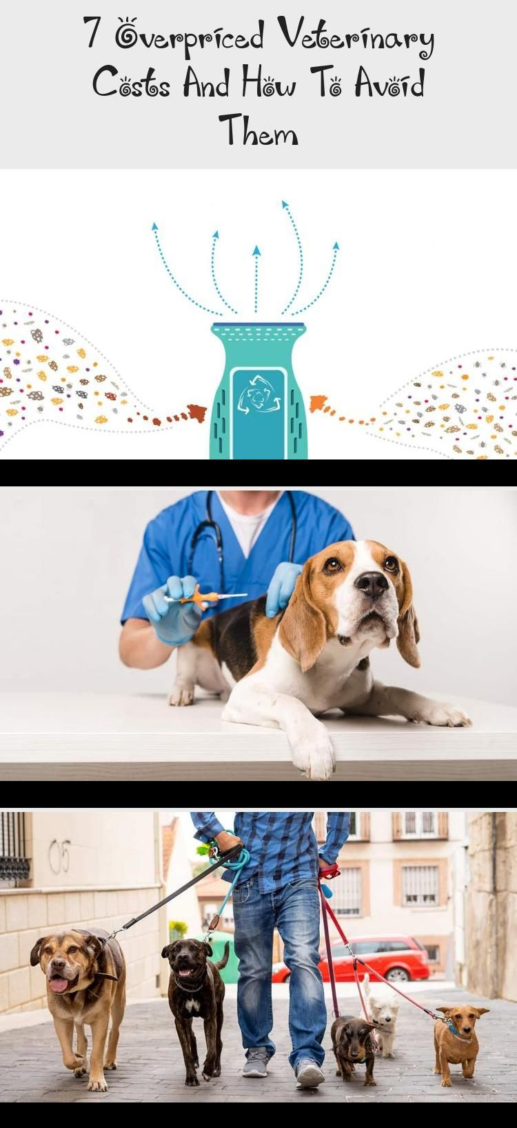 7 Overpriced Veterinary Costs And How To Avoid Them in