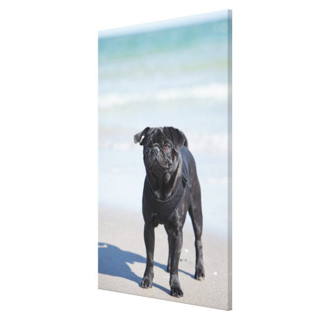 Black Pug Standing On The Beach Canvas Print #pug #dog #pug #on #beach #CanvasPrint - An abundance of sea.