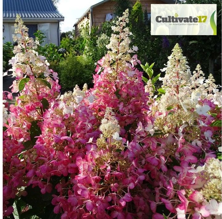 Nouveautés horticoles 2019 Jardinier paresseux