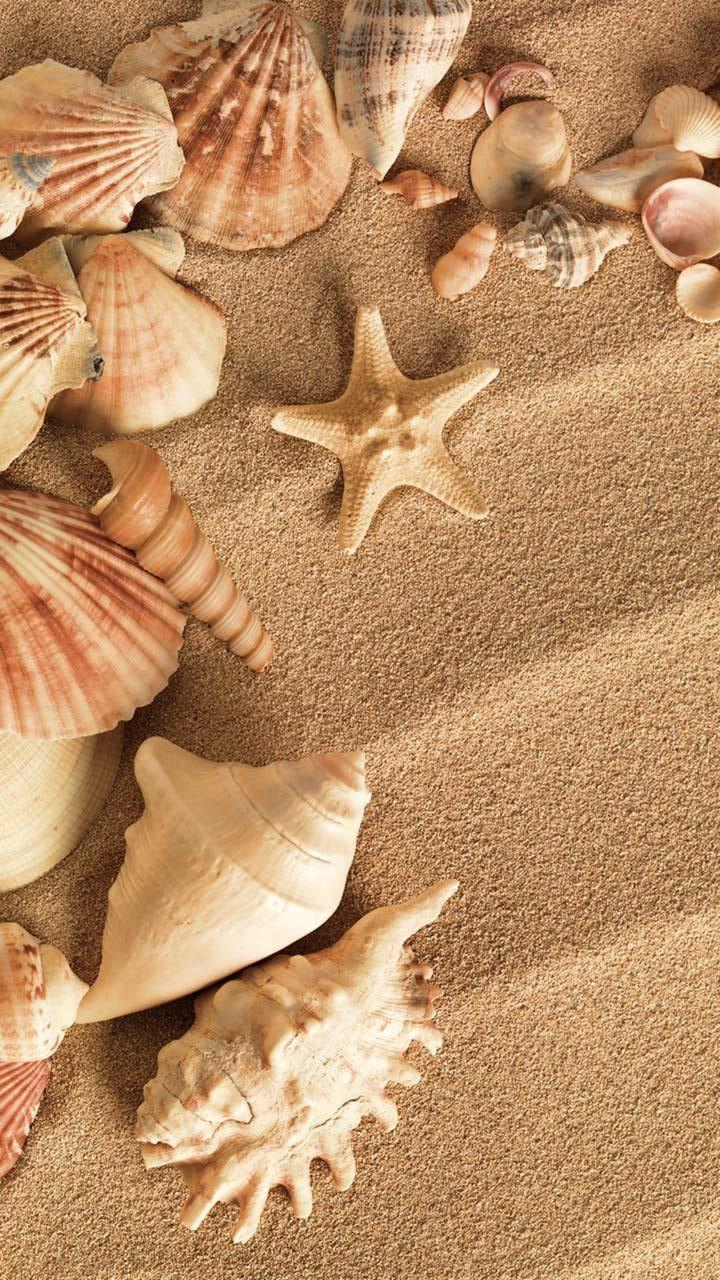Seashells Lindas Paisagens Fotos Do Mar Conchas Do Mar