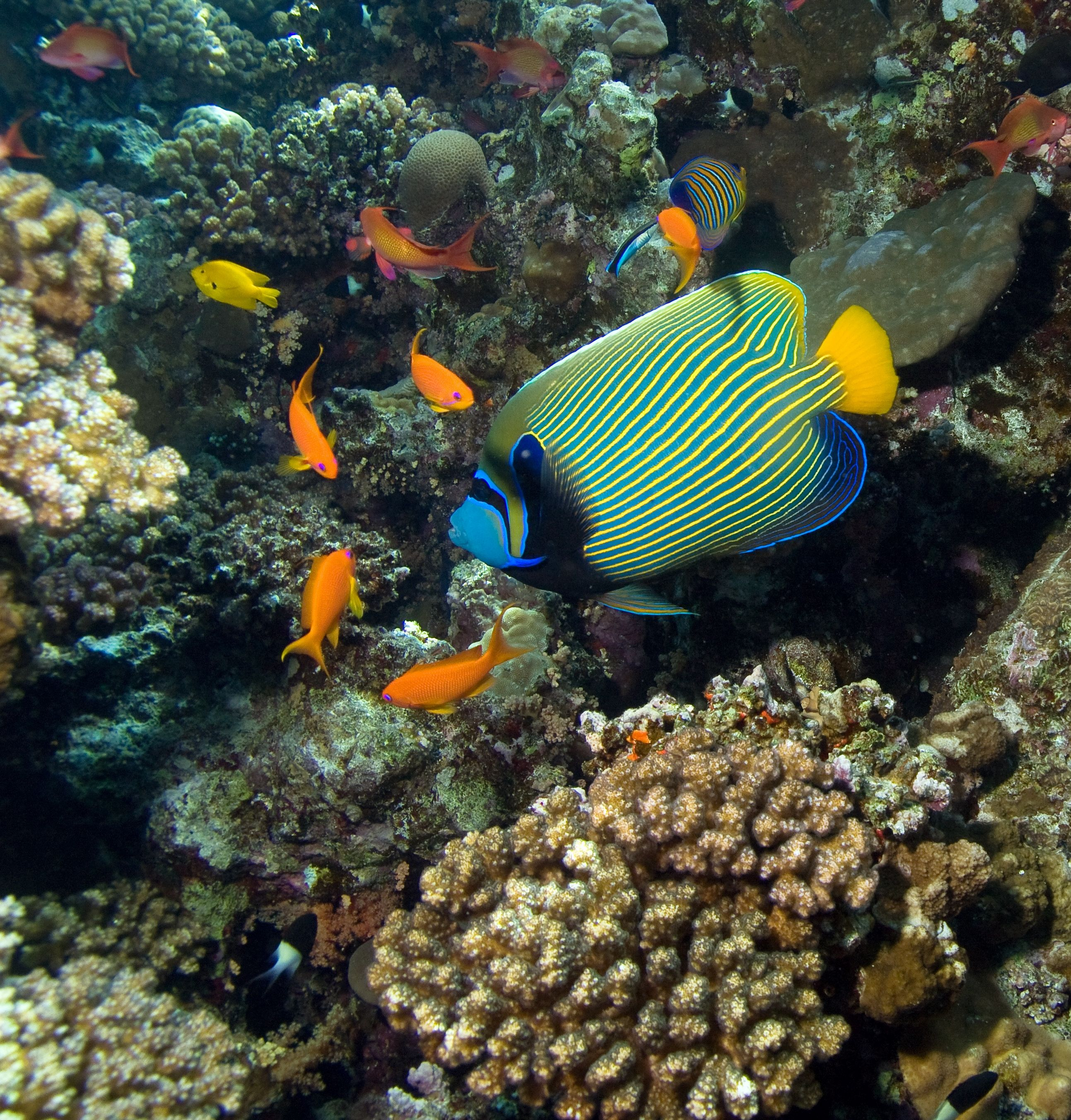 Swim with the tropical fish in the bahamas nassau for Fishing in the bahamas