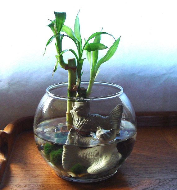 wohnideen minimalistisch kesselflicker, mercat cat mermaids lucky bamboo and marimo balls terrarium, Design ideen