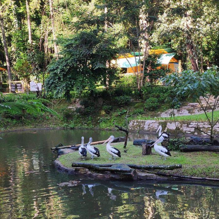 Taman Safari Indonesia Cisarua Di 2020 Luar Ruangan Taman Jepang Taman
