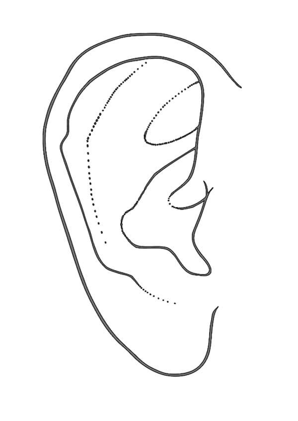 Ear Coloring Worksheet