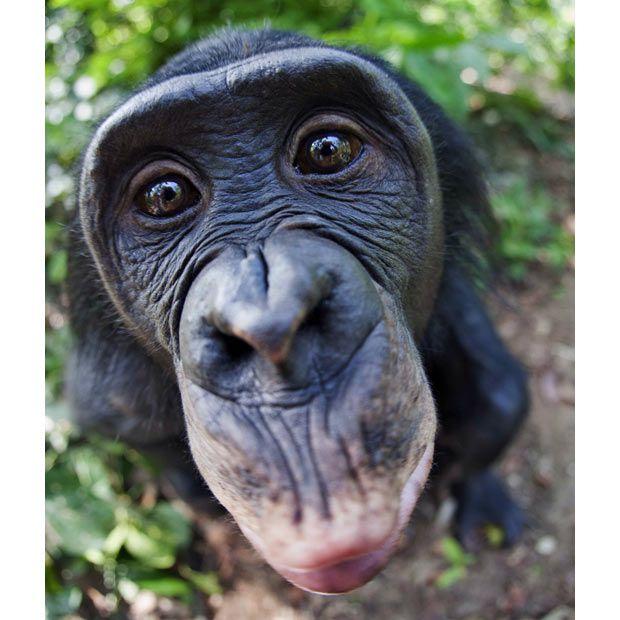 monkey face sex