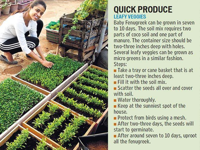 Image result for terrace vegetable garden in india