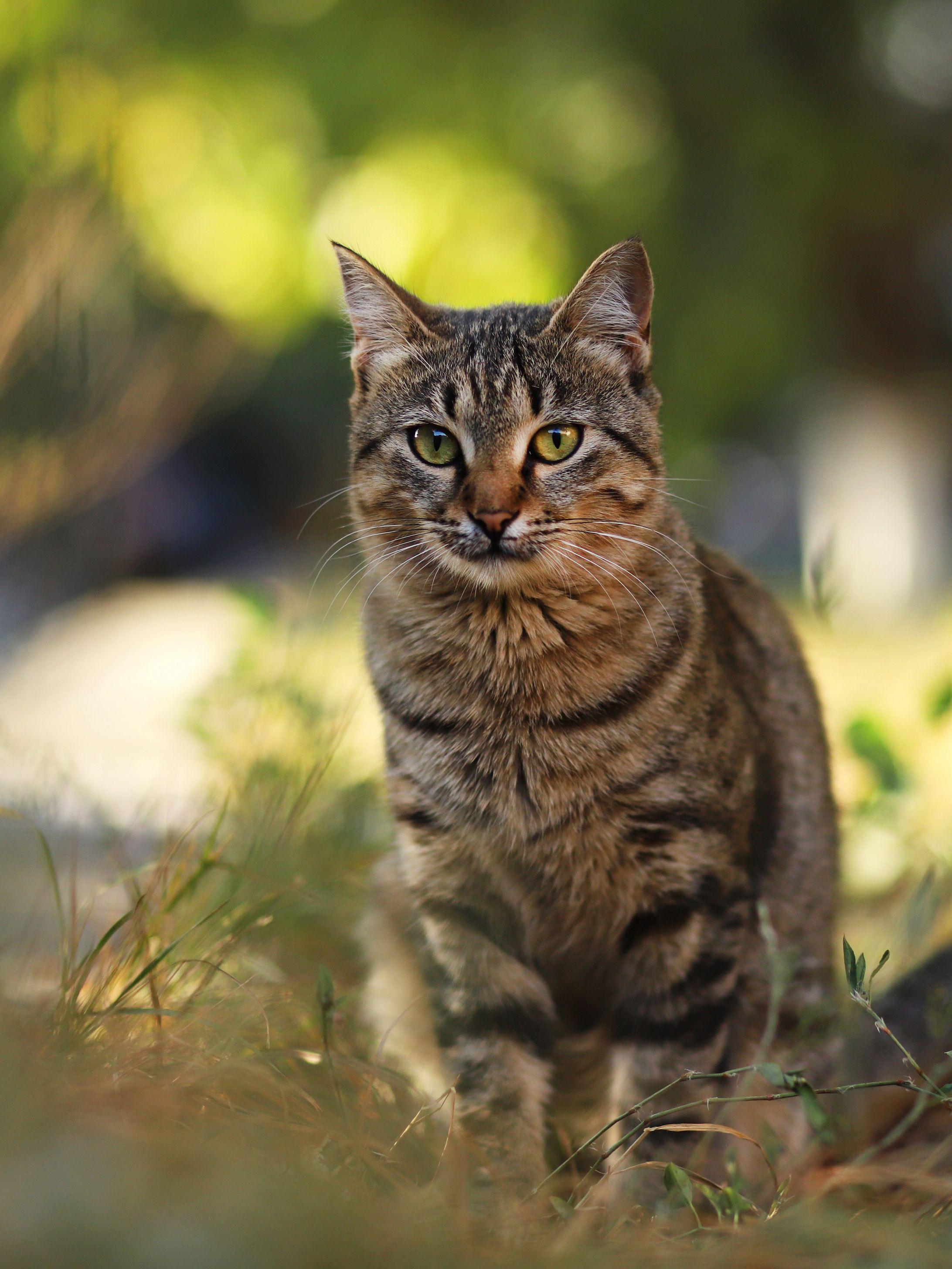 Brown Tabby Cat Names