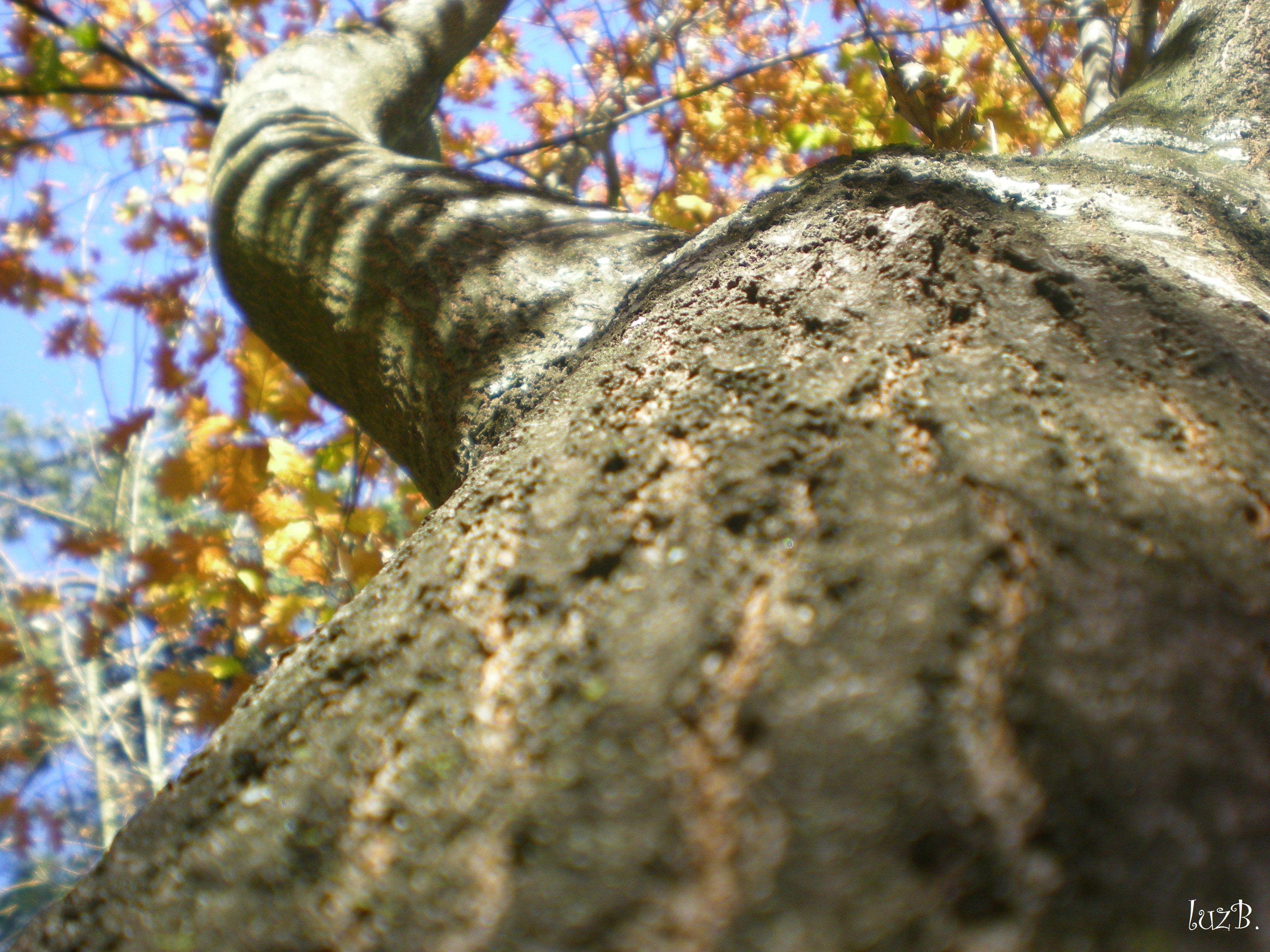 Adorava aquelas árvores com o outono estampada na face .