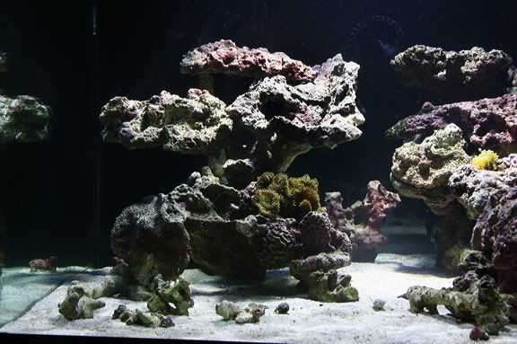 reef aquascaping ideas - Google Search | Saltwater ...