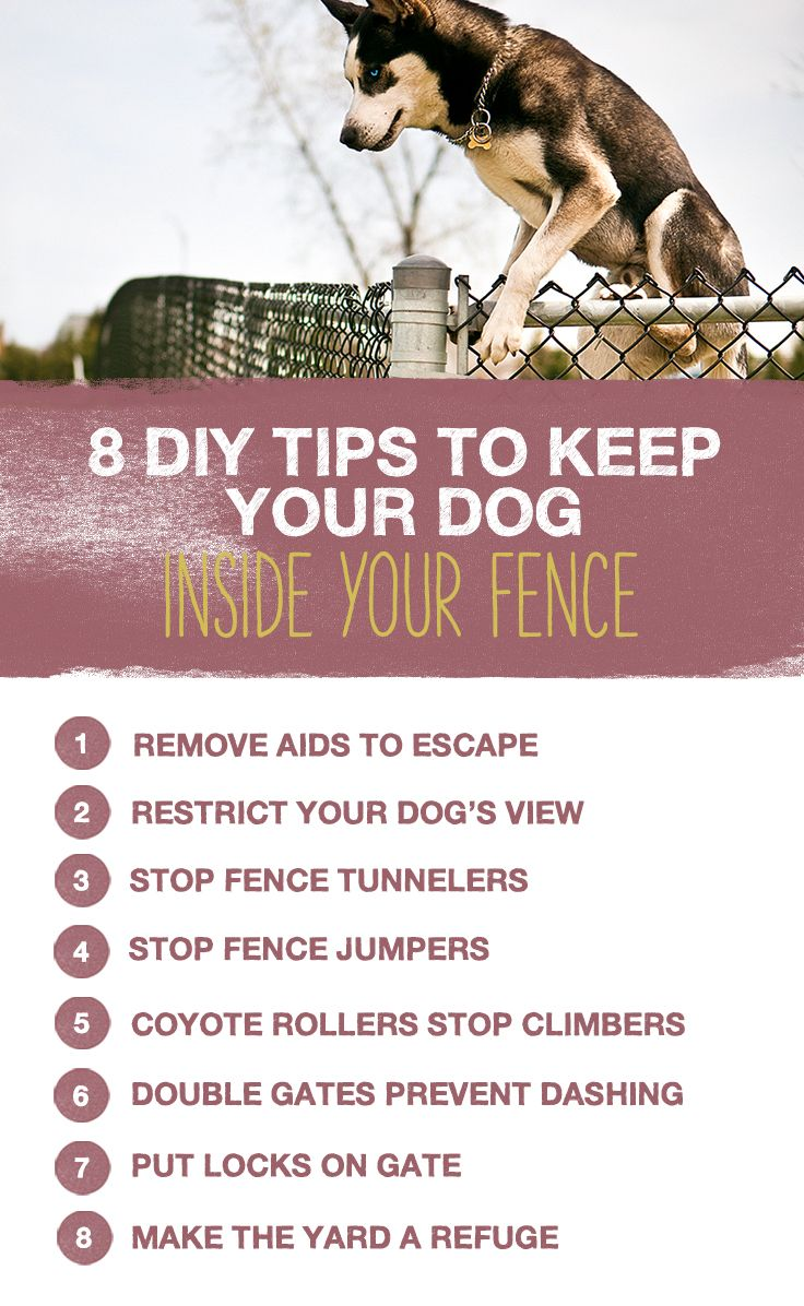 8 diy tips to keep your dog inside your fence dog