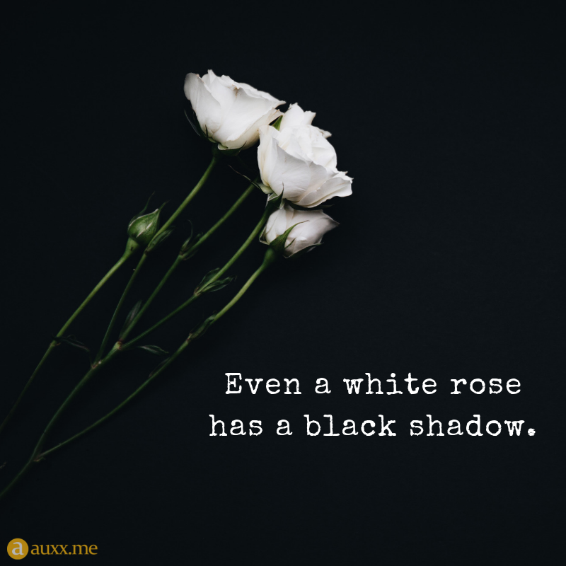 Even A White Rose Has A Black Shadow Whiterose Shadow Black Shadow Quotes Rose Quotes Flower Quotes
