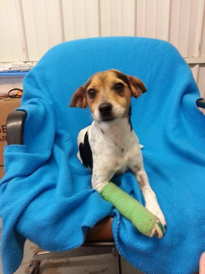 whosedog Greenville, KY senior? female possible Beagle