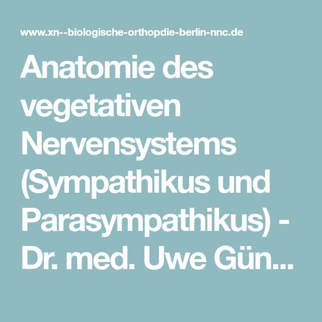 Anatomie des vegetativen Nervensystems (Sympathikus und ...