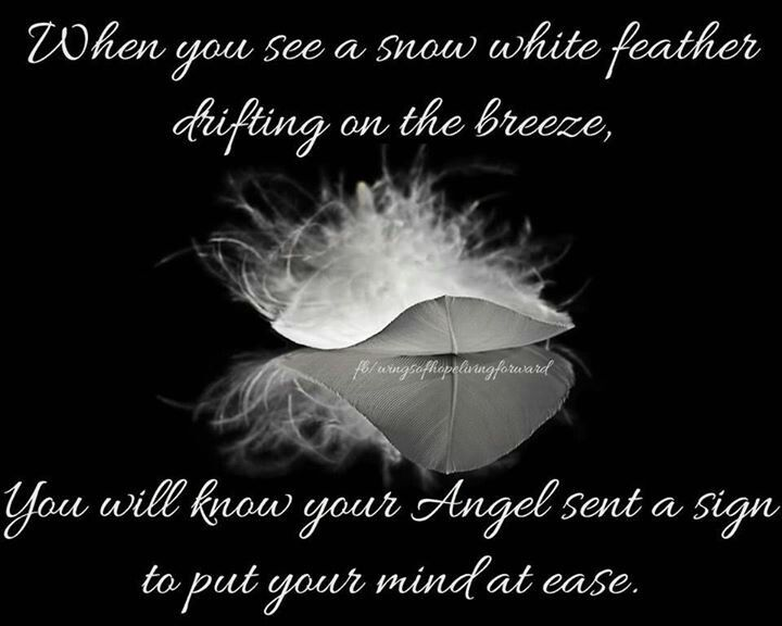 Feather from heaven | Feather quotes, Heaven quotes, Angel ...