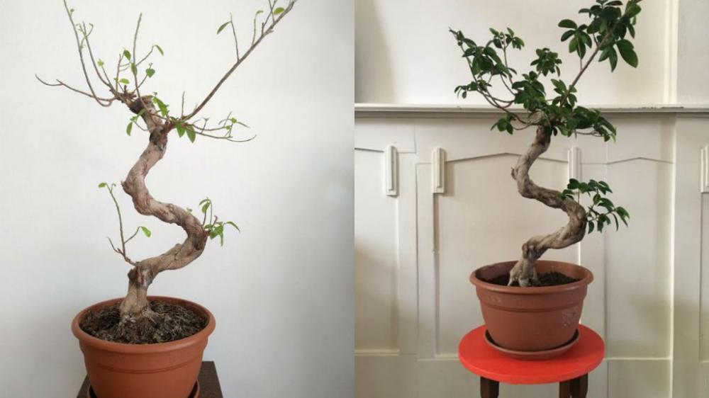 Deze 3 Planten Waren Op Sterven Na Dood Maar Zo Werden Ze Weer Opgelapt Rtl Nieuws In 2020 Planten Planten Binnen Potgrond
