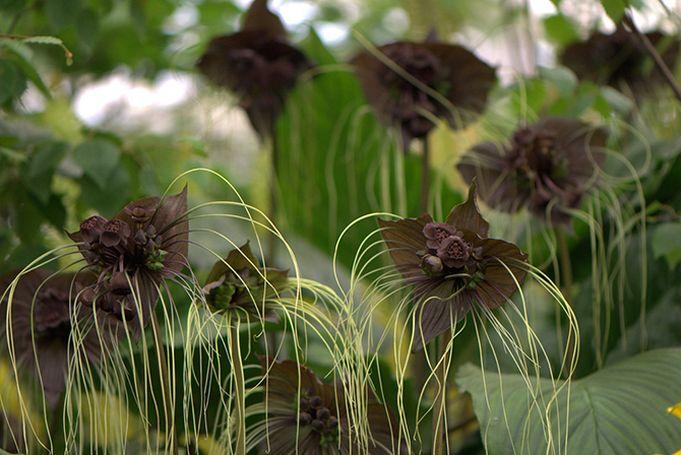Galeria Zdjec Najpiekniejsze Kwiaty Swiata Czesc I Meteoprog Pl Plants Botanical Nature