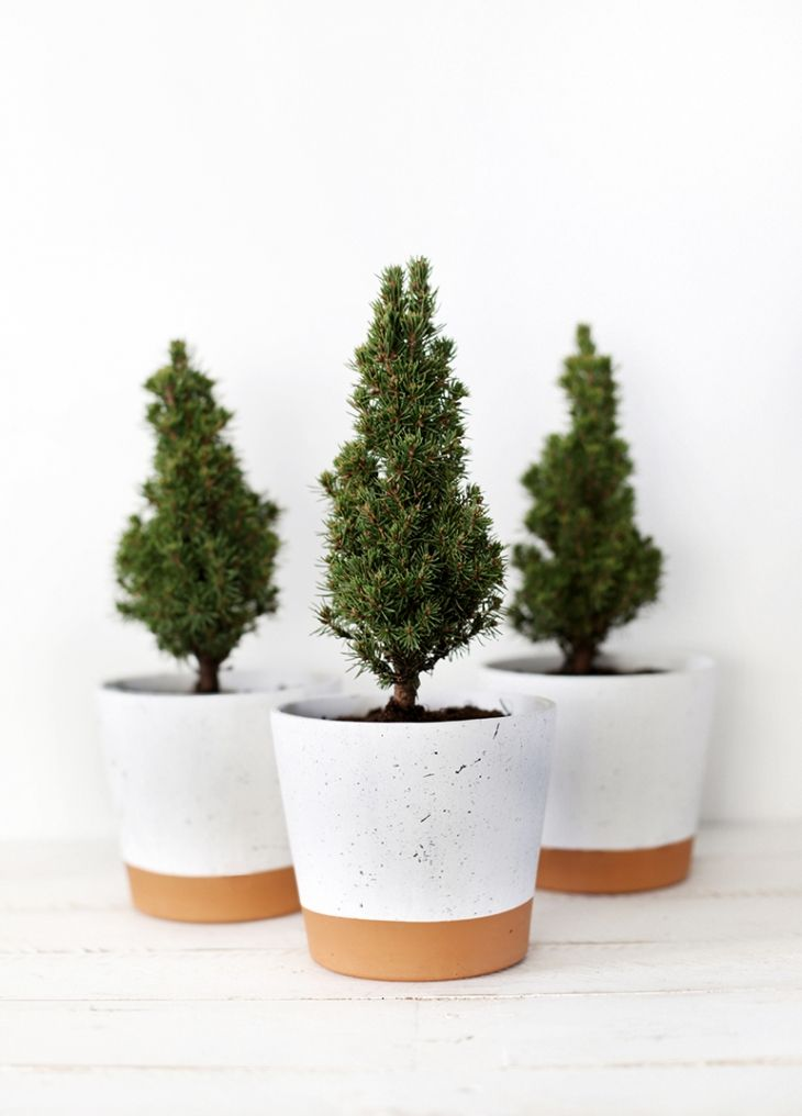 Mini Christmas Trees Packed With Joy And Cheerfulness | kalėdos ...