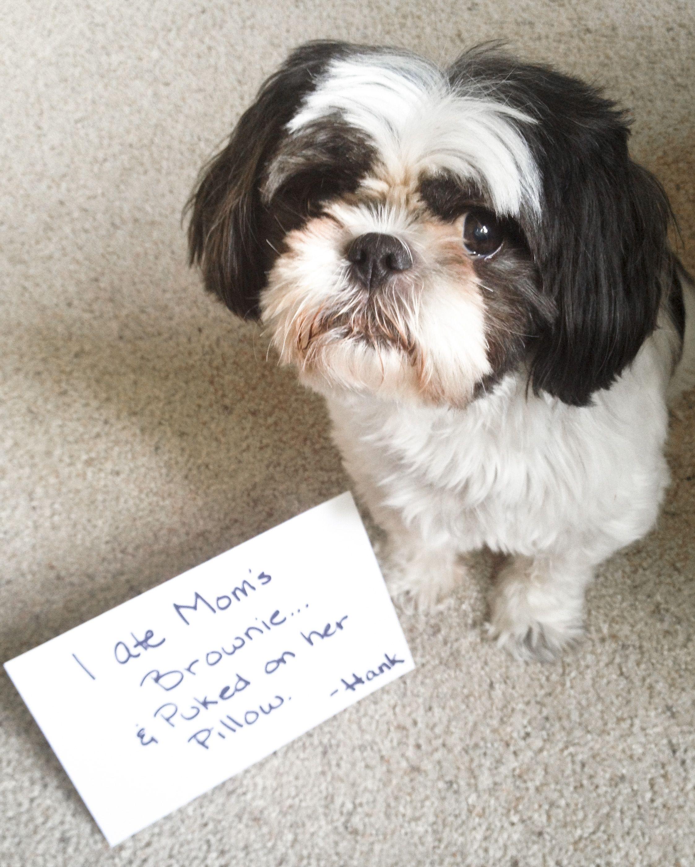 Pin On Dog Shaming
