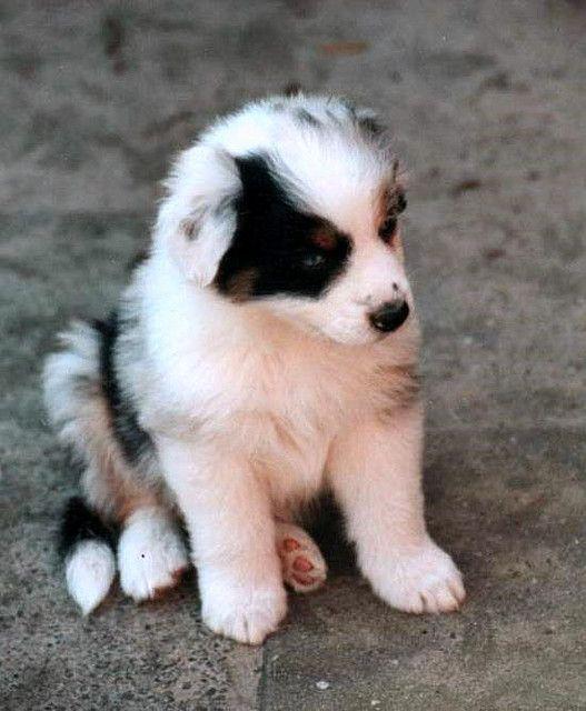 Download Wallpapers Black Pug Small Puppy Black Dog Puppies Pets Pugs Besthqwallpapers Com Schwarzer Mops Schwarze Hunde Mops