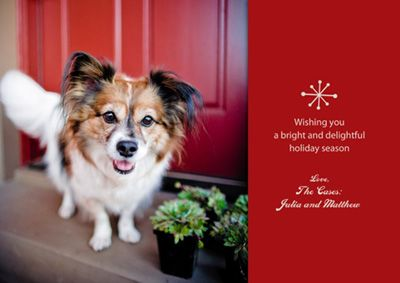 Professional photographer jamie pflughoeft of cowbelly pet professional photographer jamie pflughoeft of cowbelly pet photography in seattle shares her top 5 tips for holiday greeting cardsxmas m4hsunfo