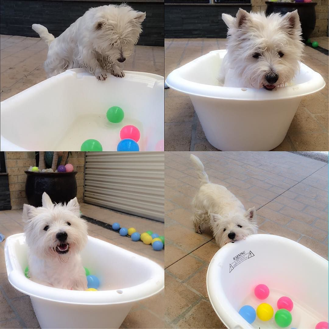 Mum really?.... This is my babies bath in which I have my baths in. I really need that shell hard blue pool everyone was talking about this is far too small by emma_the_westie