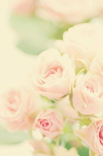 Pinned By Pinafore Chrome Extension Beautiful Flowers Photos Flower Photos Flowers