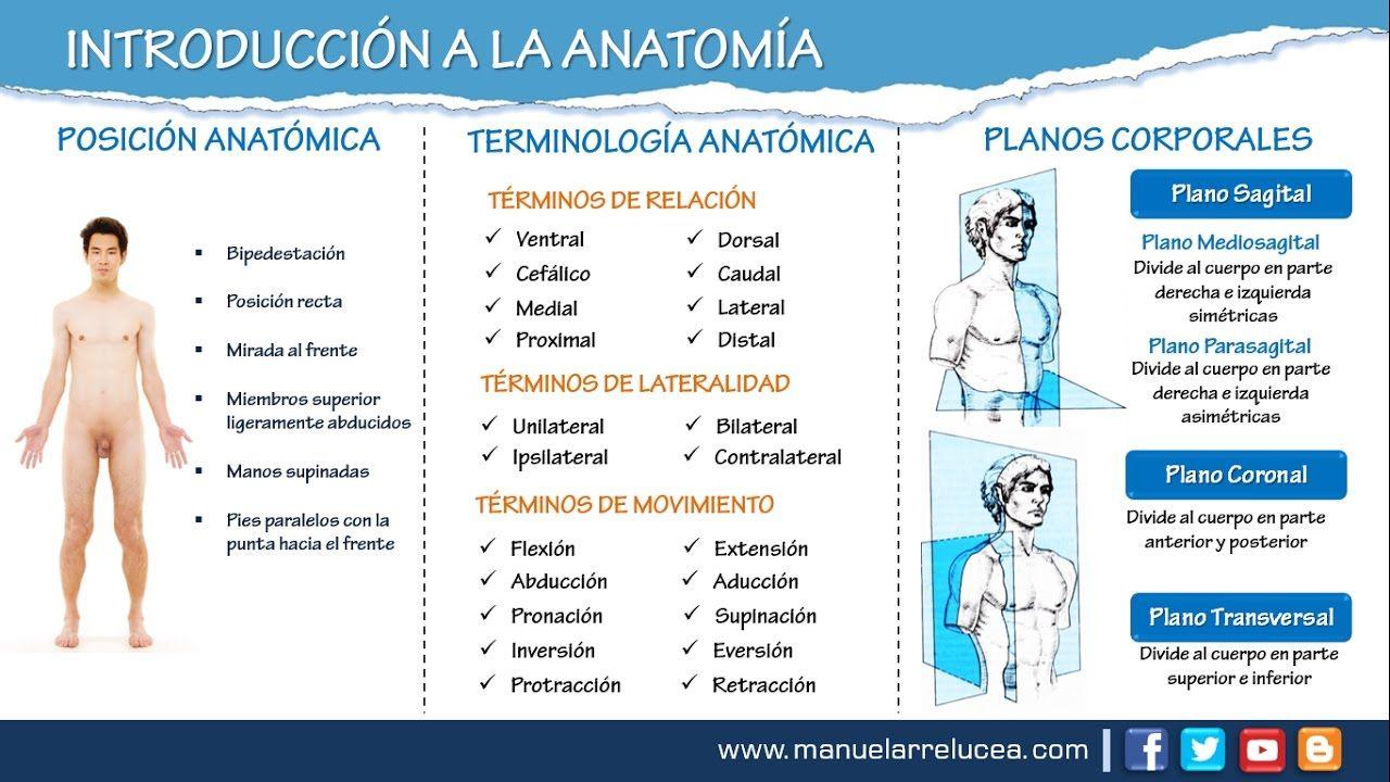 INTRODUCCION A LA ANATOMÍA   anatomia   Pinterest   Anatomía, El ...