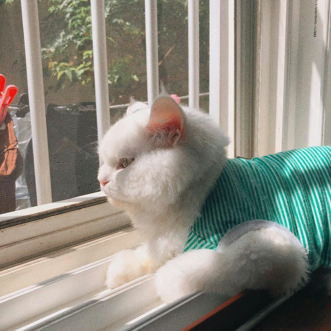 Pin by 𝓅𝓎𝓆𝒶 ° on ` ネコ Cat aesthetic, Siamese cats facts