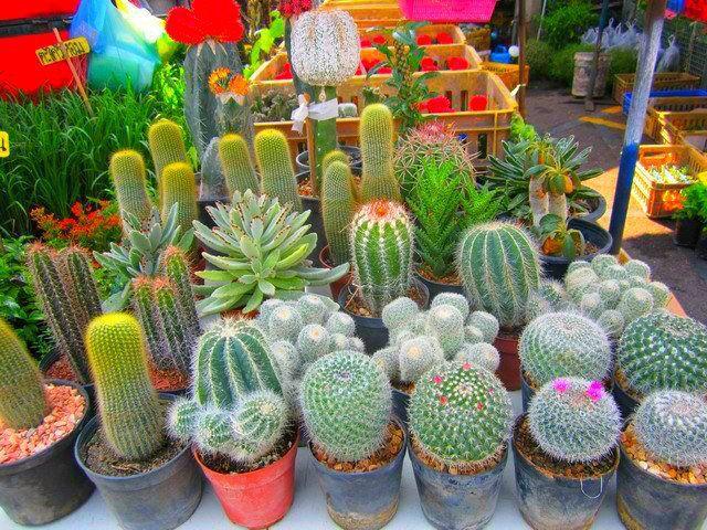 PLANTAR-CACTUS-1.jpg (640×480) | swannie | Pinterest | Mini jardines ...