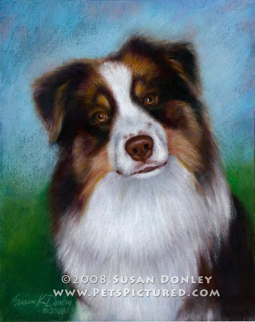 Reef Australian Shepherd Memorial Portrait Original Watercolor