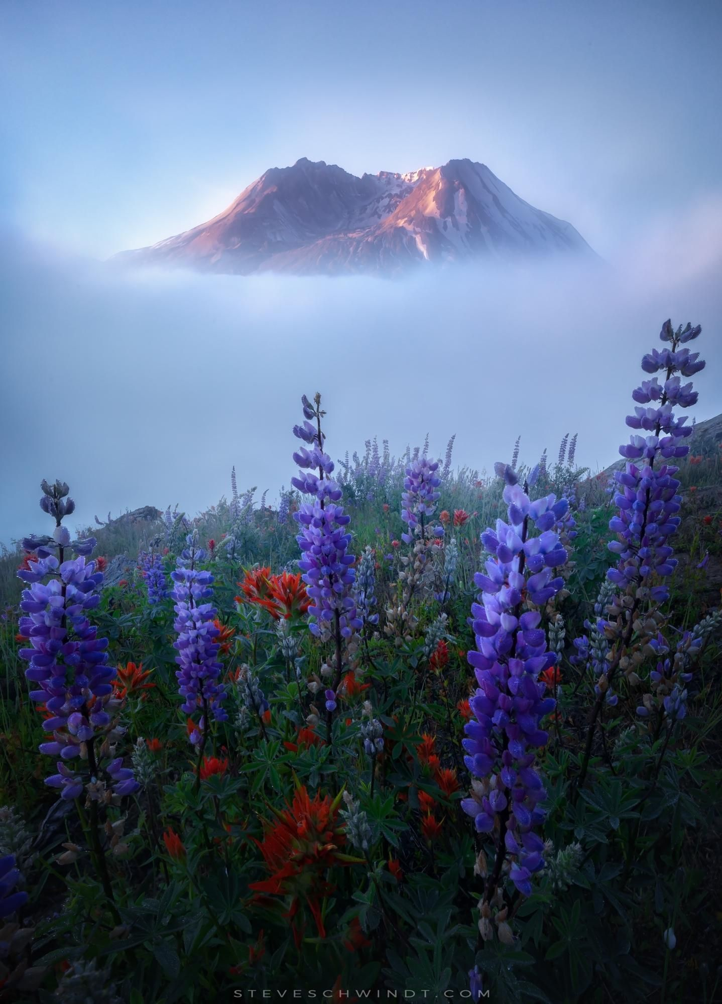 Mount St Helens Peaking Above Beautiful Wildflowers And Thick Fog