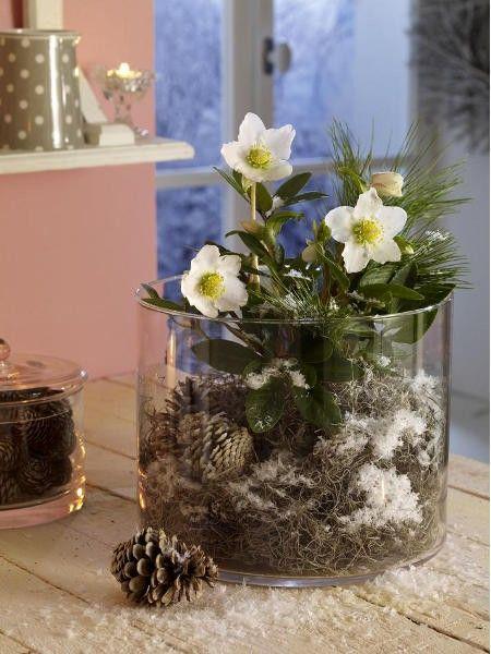 verzaubernd elfenzarte christrosen deko wintertrends. Black Bedroom Furniture Sets. Home Design Ideas