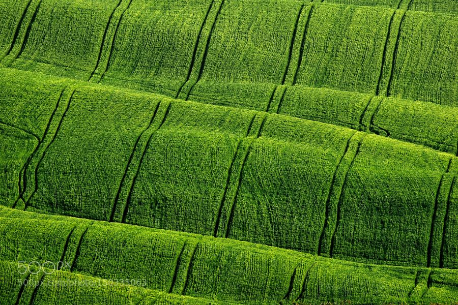 Green velvet - made in Italy by TizianoPieroni. Please Like http://fb.me/go4photos and Follow @go4fotos Thank You. :-)